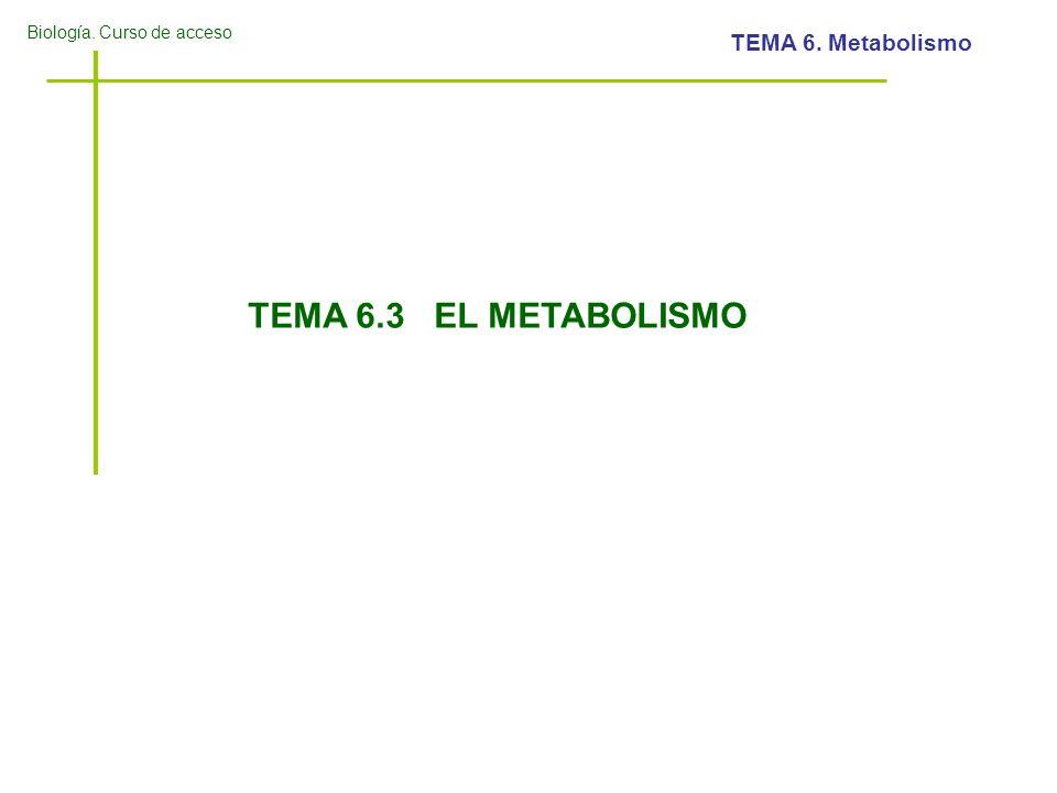 TEMA 6.3 EL METABOLISMO