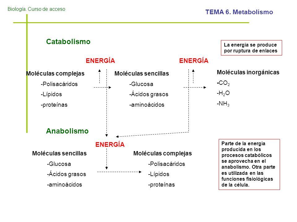 Catabolismo Anabolismo ENERGÍA ENERGÍA ENERGÍA Moléculas complejas