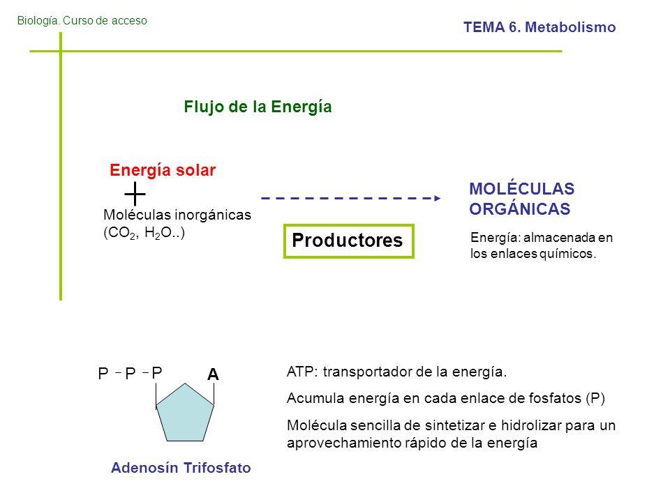 Productores Flujo de la Energía Energía solar MOLÉCULAS ORGÁNICAS P A