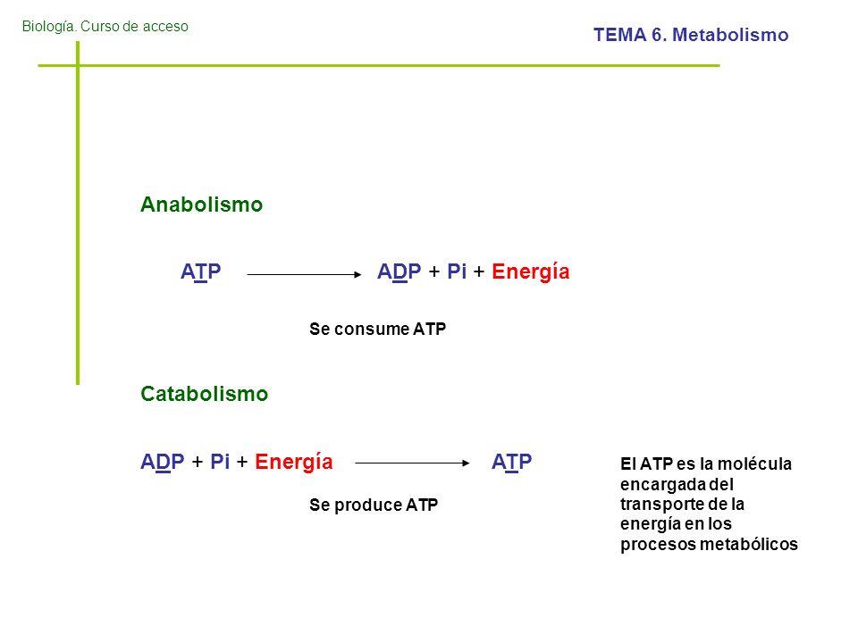 Anabolismo ATP ADP + Pi + Energía Catabolismo ADP + Pi + Energía ATP