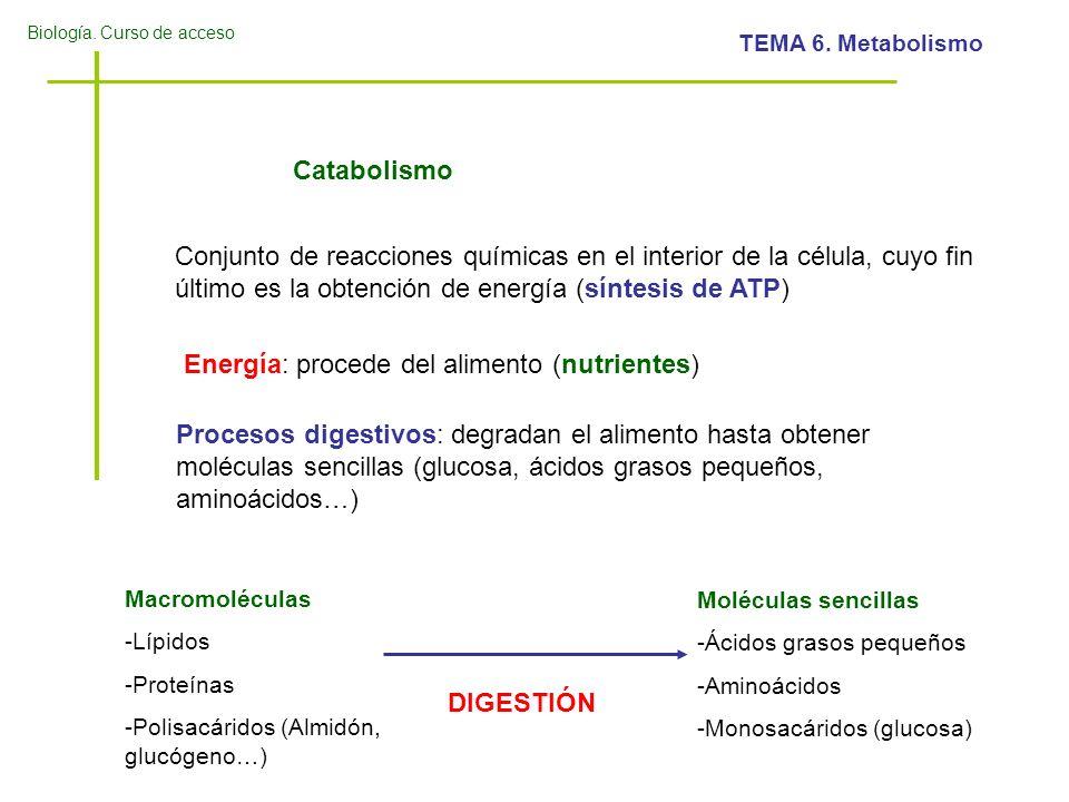 Energía: procede del alimento (nutrientes)