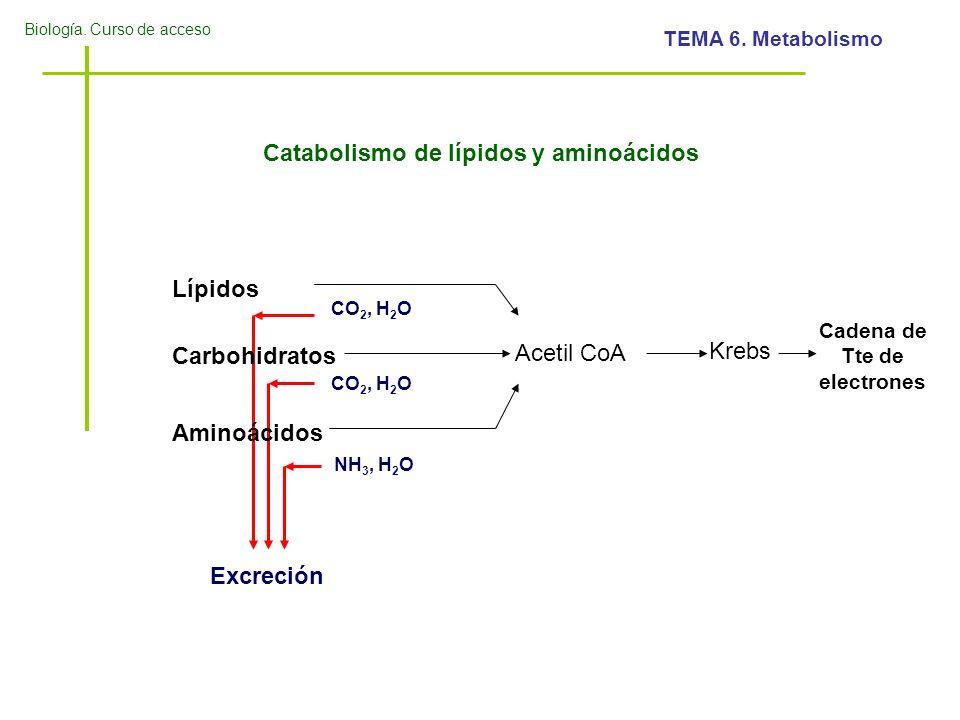 Cadena de Tte de electrones