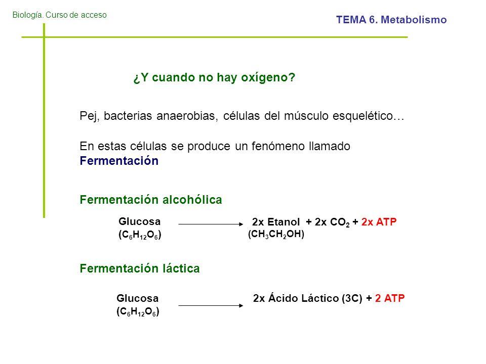 2x Ácido Láctico (3C) + 2 ATP
