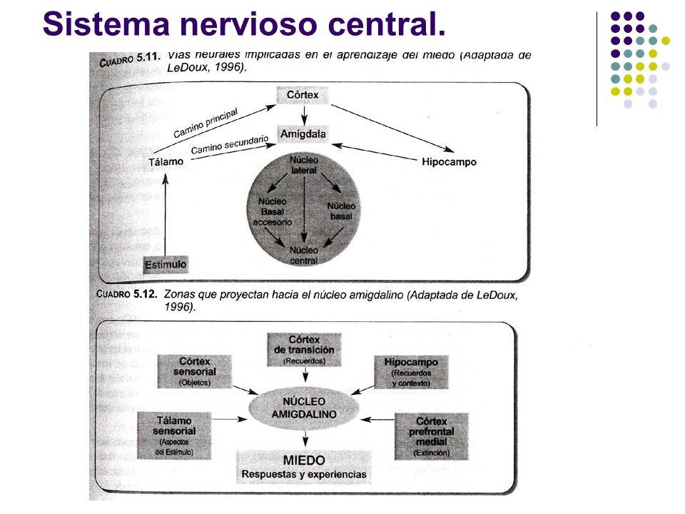 Sistema nervioso central.