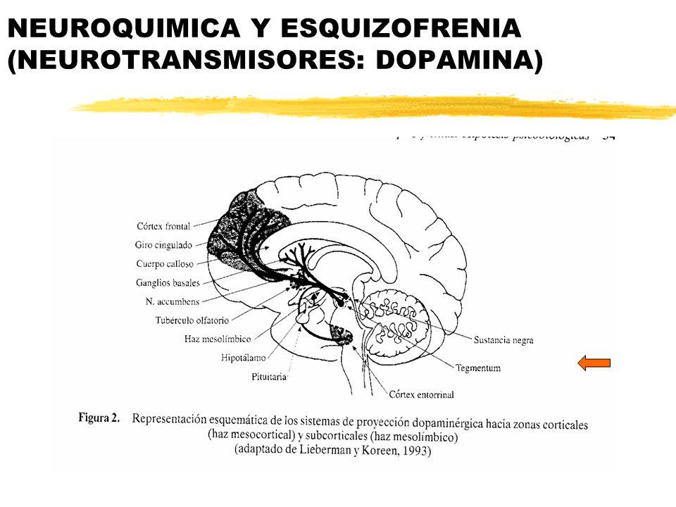 NEUROQUIMICA Y ESQUIZOFRENIA (NEUROTRANSMISORES: DOPAMINA)