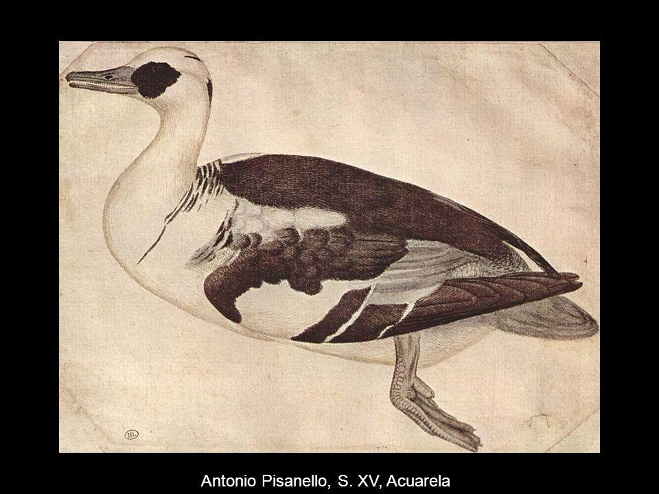 Antonio Pisanello, S. XV, Acuarela