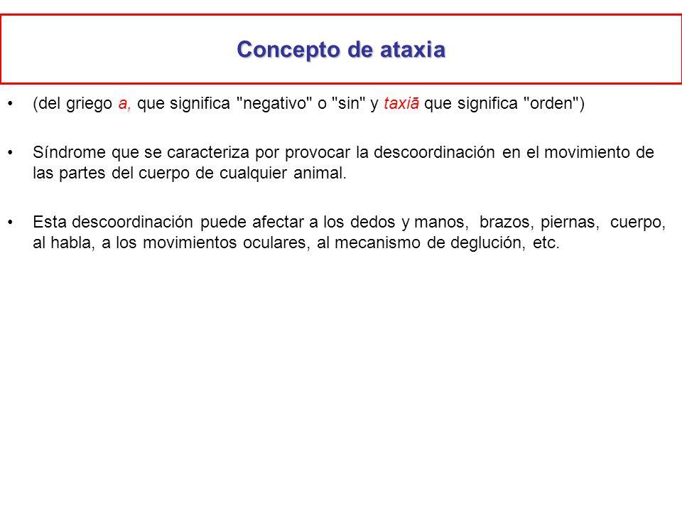 Concepto de ataxia (del griego a, que significa negativo o sin y taxiā que significa orden )