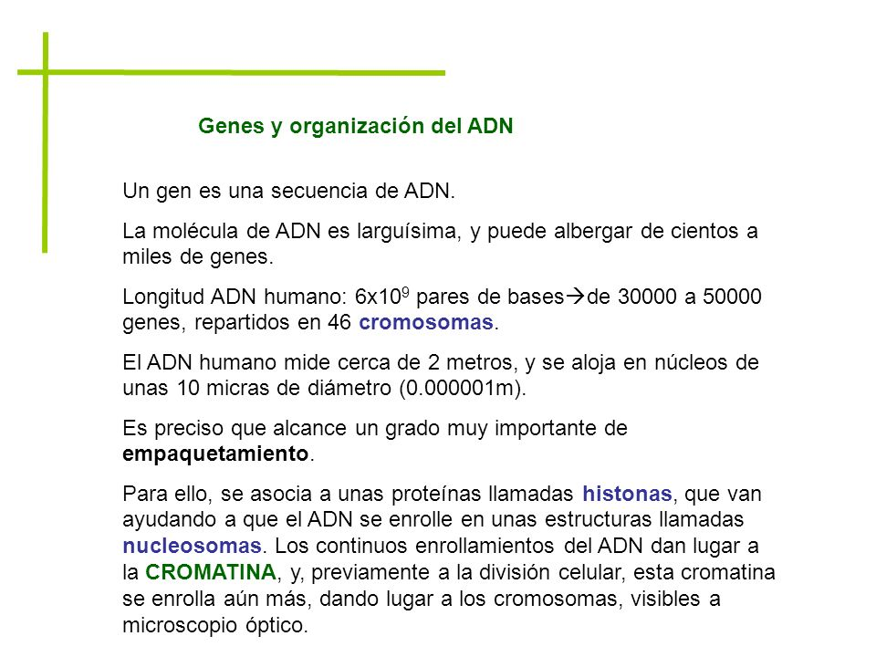 Genes y organización del ADN