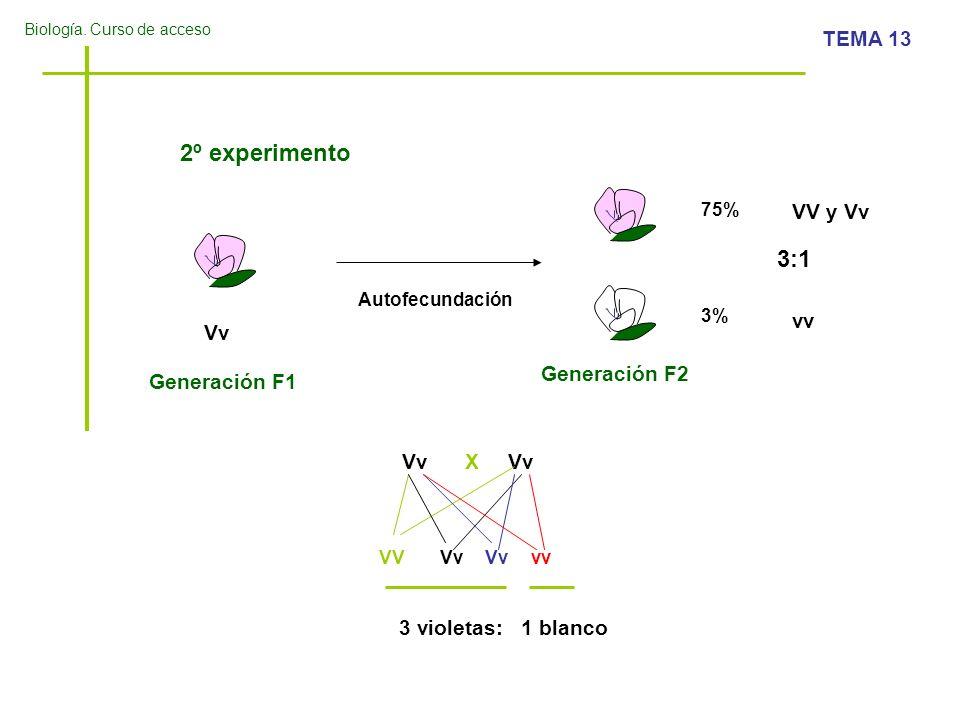 2º experimento 3:1 VV y Vv vv Vv Generación F2 Generación F1 Vv X Vv