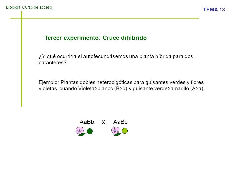 Tercer experimento: Cruce dihíbrido