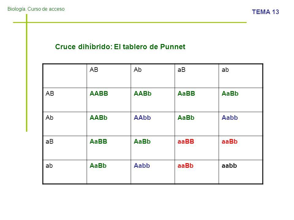 Cruce dihíbrido: El tablero de Punnet