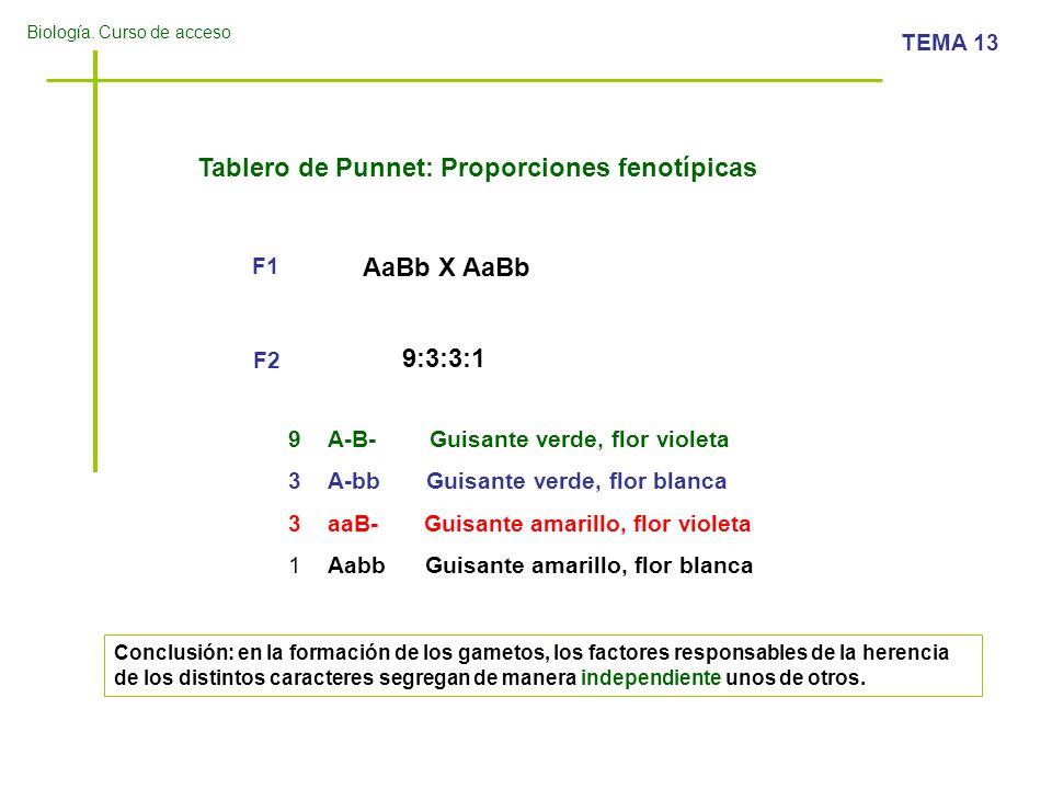 Tablero de Punnet: Proporciones fenotípicas