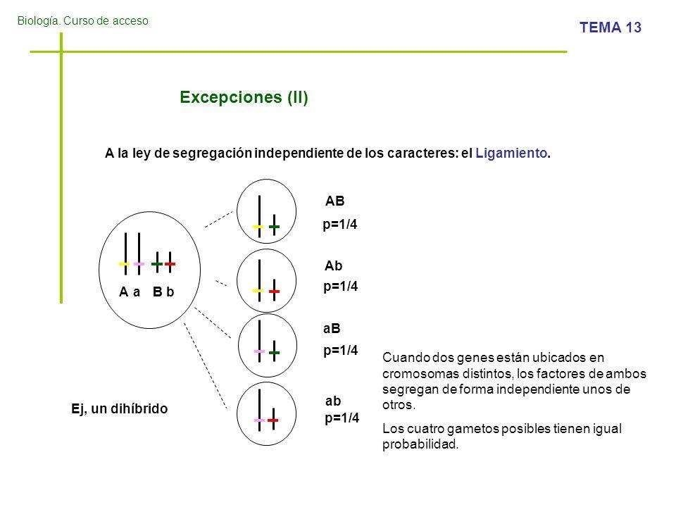 Excepciones (II)A la ley de segregación independiente de los caracteres: el Ligamiento. AB. p=1/4. Ab.