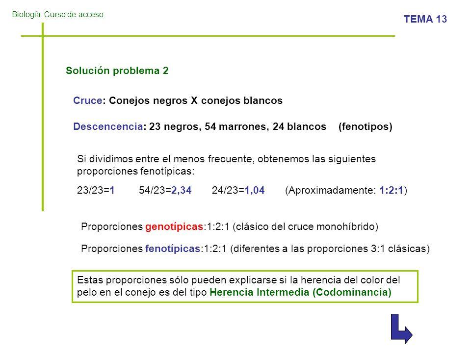 Solución problema 2 Cruce: Conejos negros X conejos blancos. Descencencia: 23 negros, 54 marrones, 24 blancos (fenotipos)