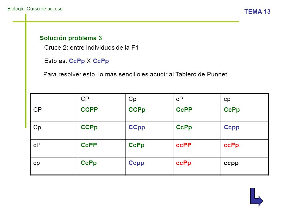 Solución problema 3 Cruce 2: entre individuos de la F1. Esto es: CcPp X CcPp. Para resolver esto, lo más sencillo es acudir al Tablero de Punnet.