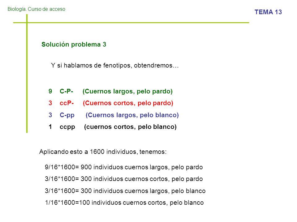 Solución problema 3Y si hablamos de fenotipos, obtendremos… C-P- (Cuernos largos, pelo pardo) ccP- (Cuernos cortos, pelo pardo)