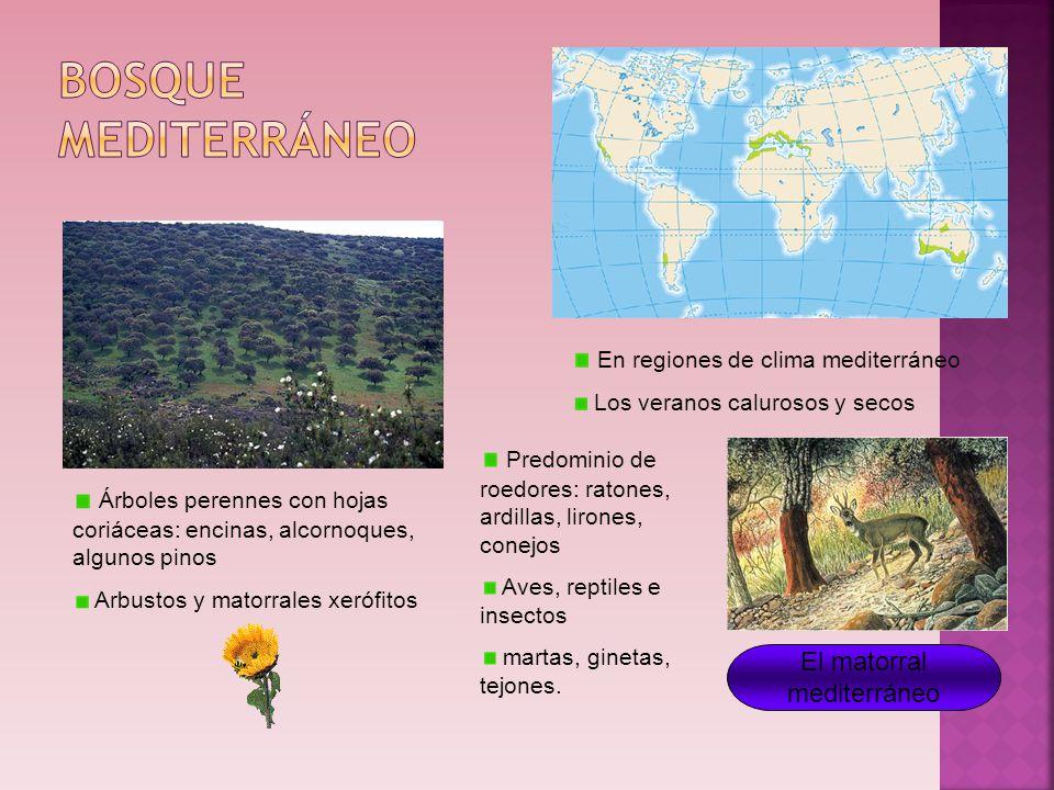 Los paisajes de la tierra ppt descargar for Arboles de hoja perenne para clima mediterraneo