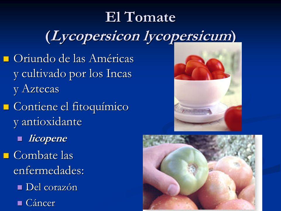 El Tomate (Lycopersicon lycopersicum)