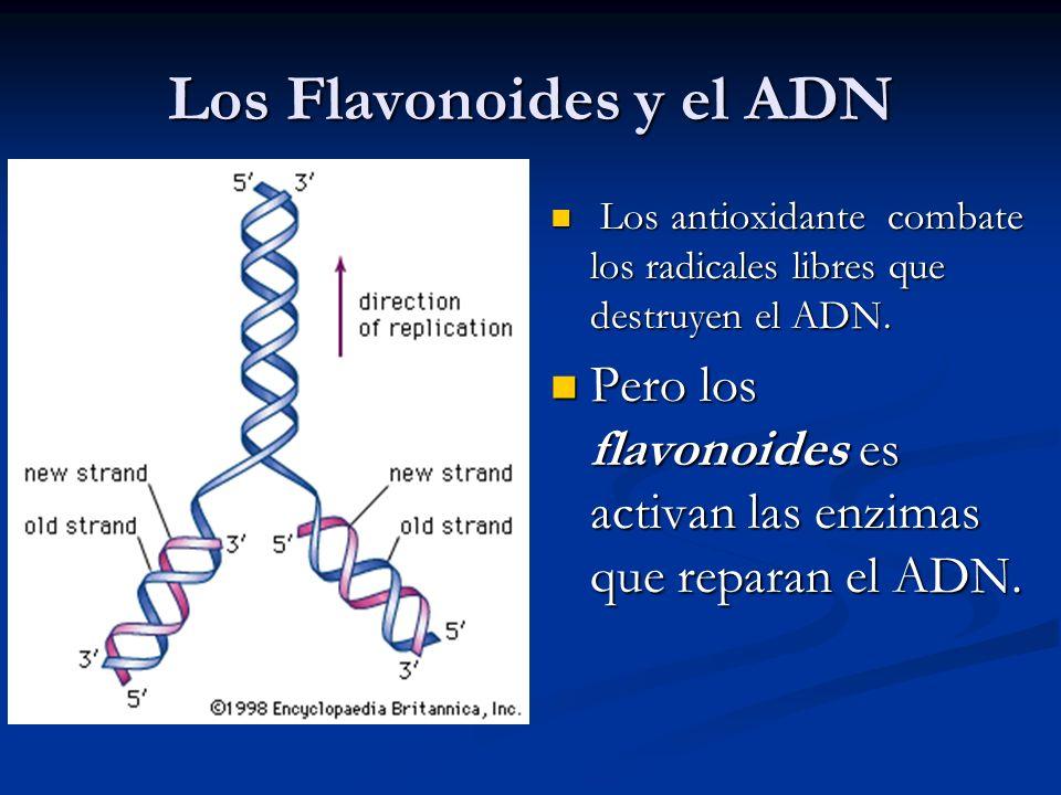 Los Flavonoides y el ADN