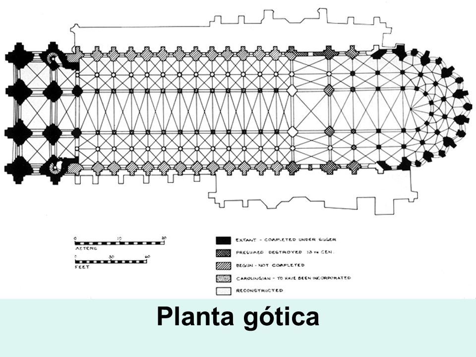 Planta gótica