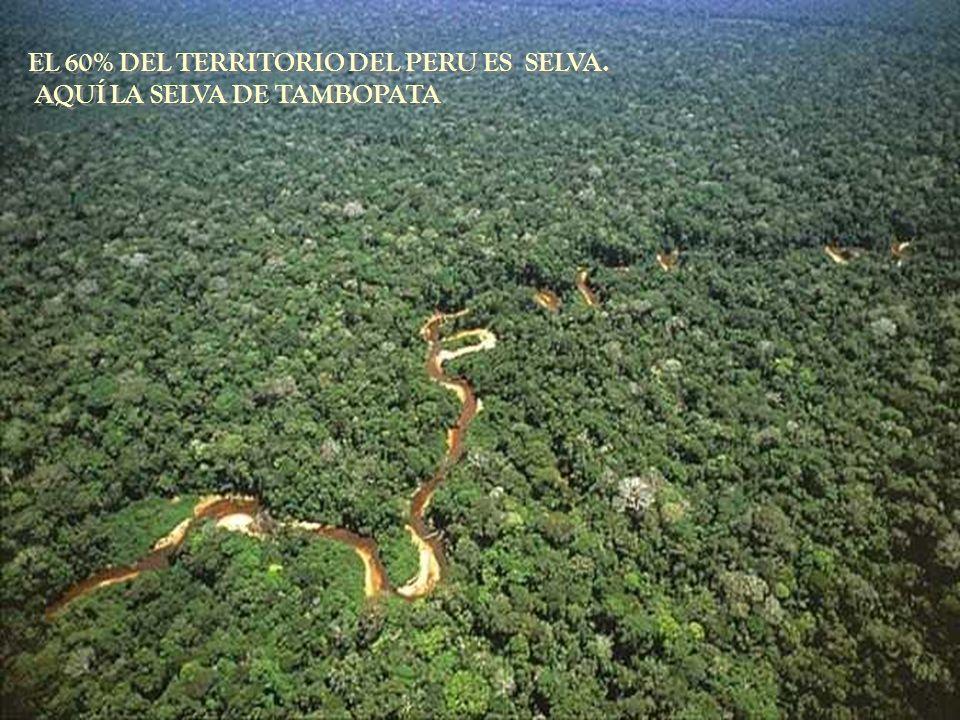 EL 60% DEL TERRITORIO DEL PERU ES SELVA.