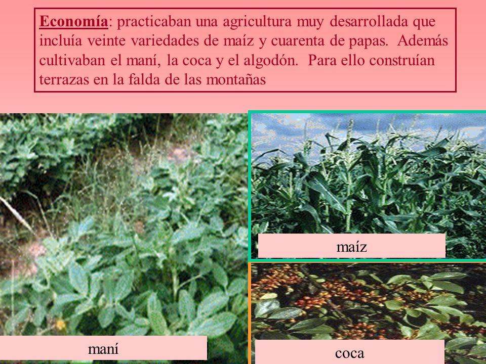 Economía: practicaban una agricultura muy desarrollada que incluía veinte variedades de maíz y cuarenta de papas. Además cultivaban el maní, la coca y el algodón. Para ello construían terrazas en la falda de las montañas