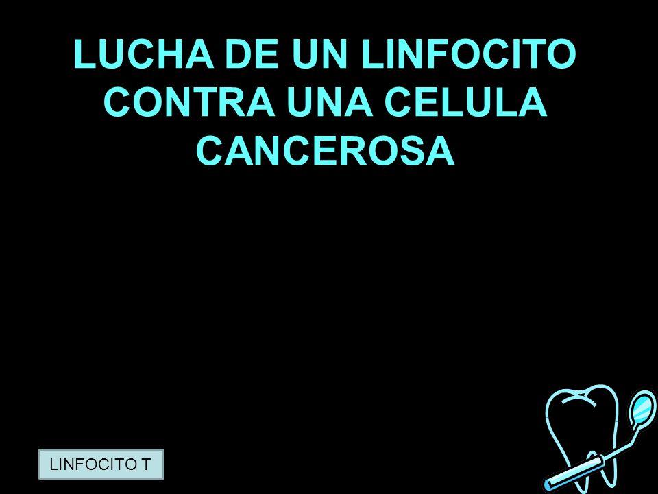 LUCHA DE UN LINFOCITO CONTRA UNA CELULA CANCEROSA