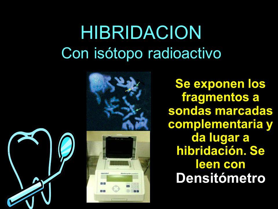 HIBRIDACION Con isótopo radioactivo