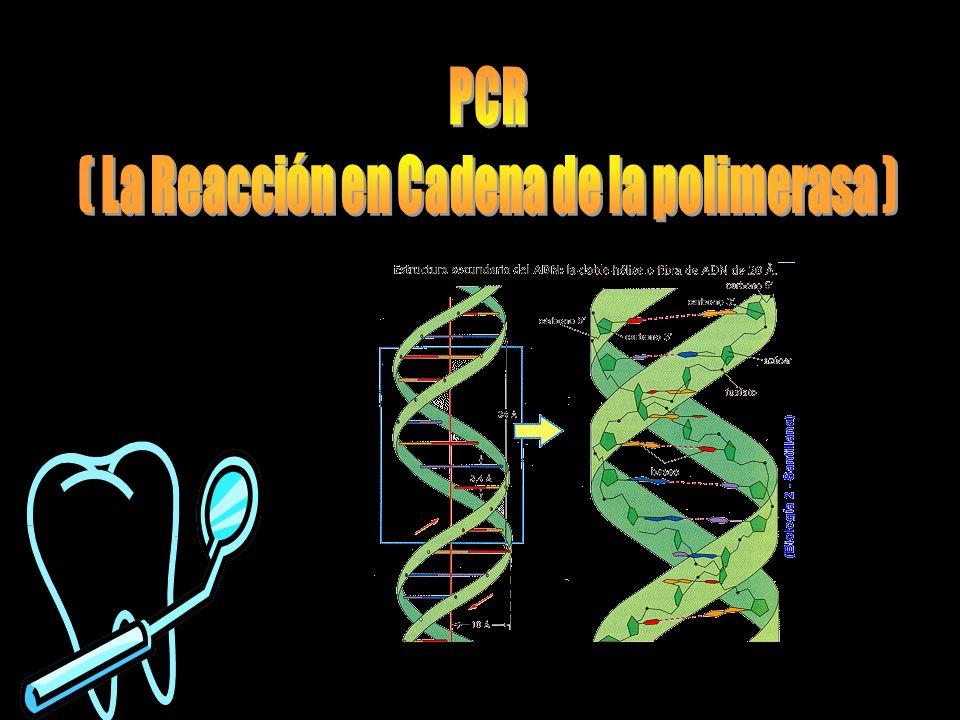 ( La Reacción en Cadena de la polimerasa )