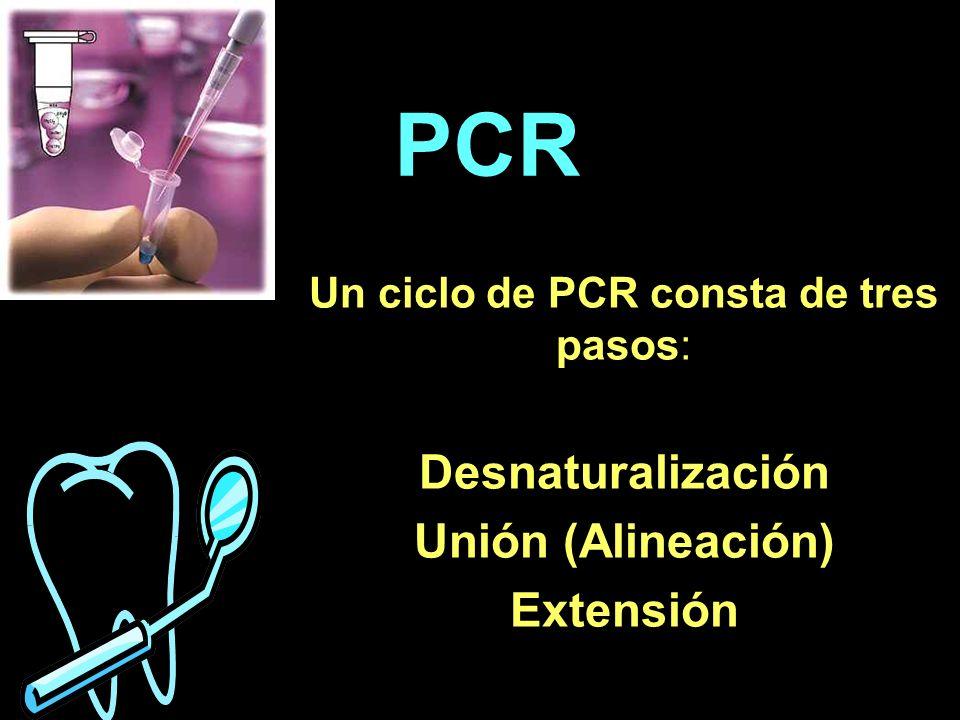 Un ciclo de PCR consta de tres pasos: