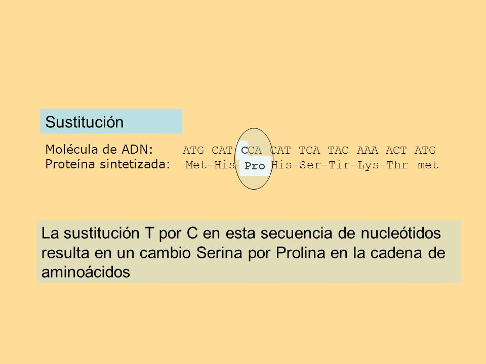 SustituciónMolécula de ADN: ATG CAT TCA CAT TCA TAC AAA ACT ATG. Proteína sintetizada: Met-His-Ser-His-Ser-Tir-Lys-Thr met.