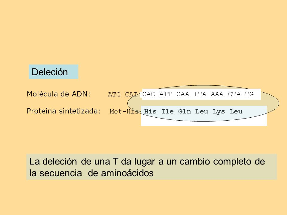 DeleciónMolécula de ADN: ATG CAT TCA CAT TCA TAC AAA ACT ATG. Proteína sintetizada: Met-His-Ser-His-Ser-Tir-Lys-Thr met.