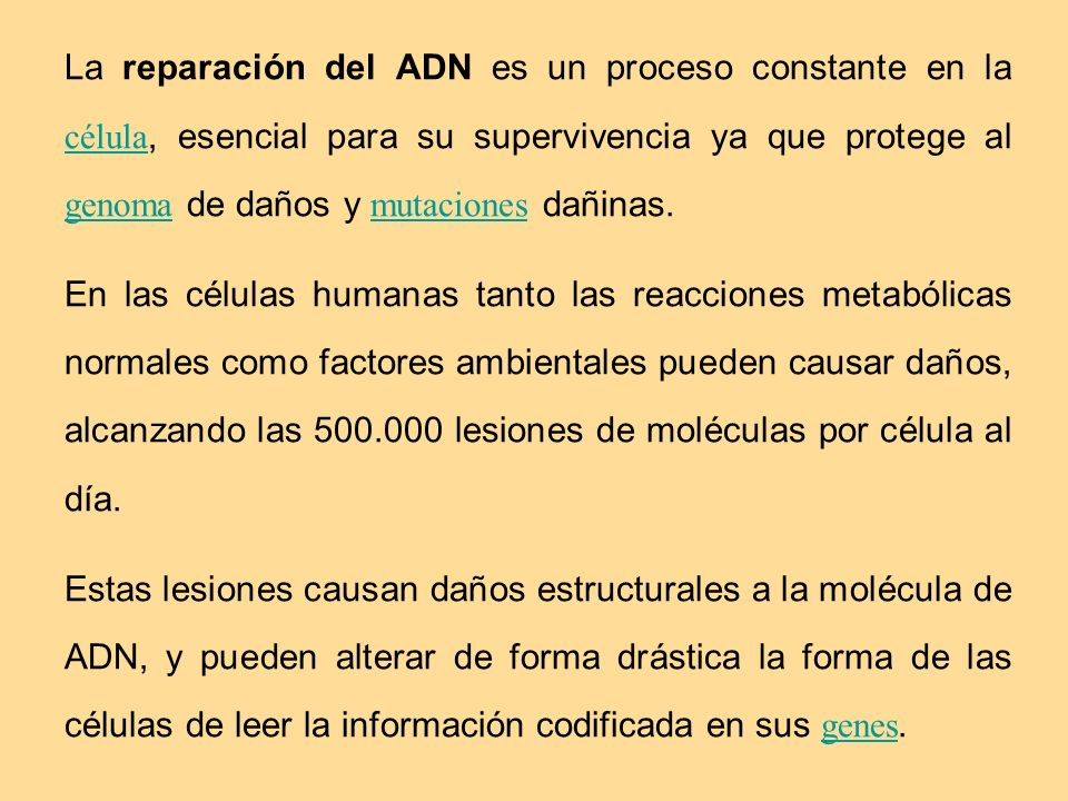 La reparación del ADN es un proceso constante en la célula, esencial para su supervivencia ya que protege al genoma de daños y mutaciones dañinas.