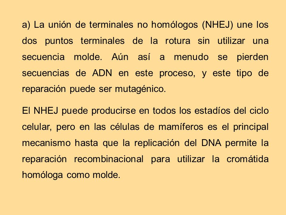 a) La unión de terminales no homólogos (NHEJ) une los dos puntos terminales de la rotura sin utilizar una secuencia molde. Aún así a menudo se pierden secuencias de ADN en este proceso, y este tipo de reparación puede ser mutagénico.