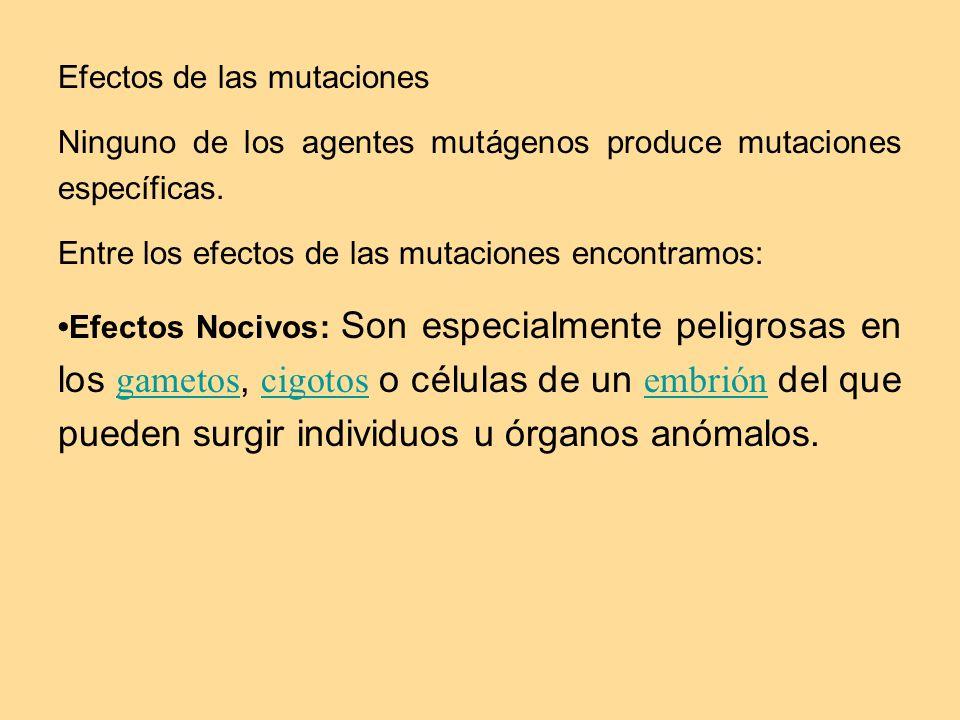 Efectos de las mutaciones