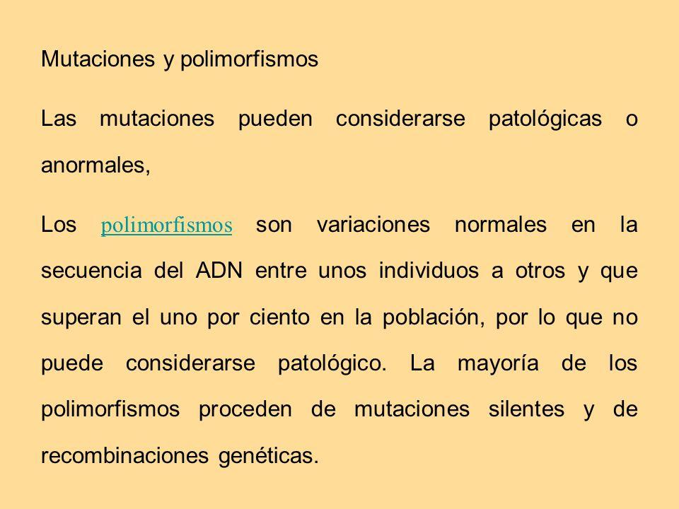 Mutaciones y polimorfismos