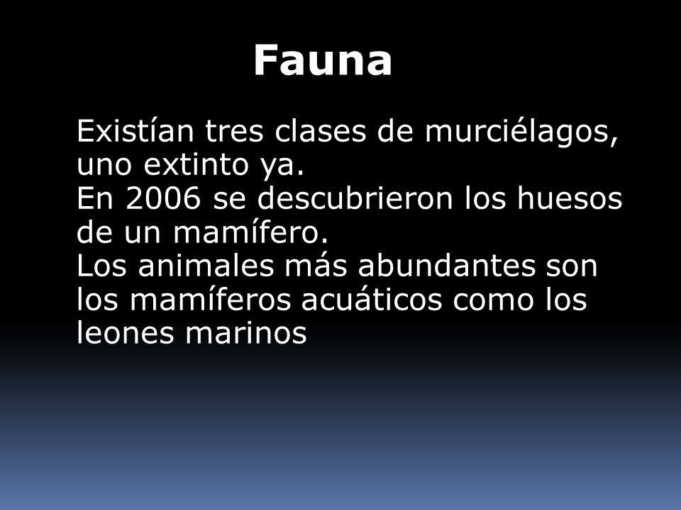 Fauna Existían tres clases de murciélagos, uno extinto ya.
