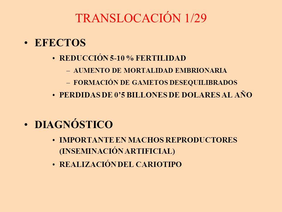 TRANSLOCACIÓN 1/29 EFECTOS DIAGNÓSTICO REDUCCIÓN 5-10 % FERTILIDAD