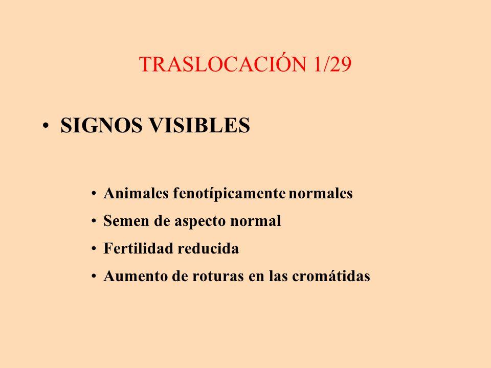 TRASLOCACIÓN 1/29 SIGNOS VISIBLES Animales fenotípicamente normales