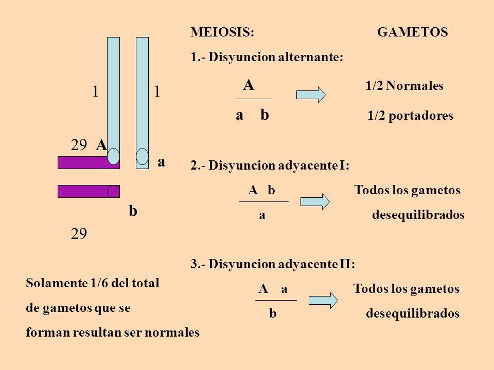 A 1/2 Normales a b 1/2 portadores 1 1 29 A a b MEIOSIS: GAMETOS