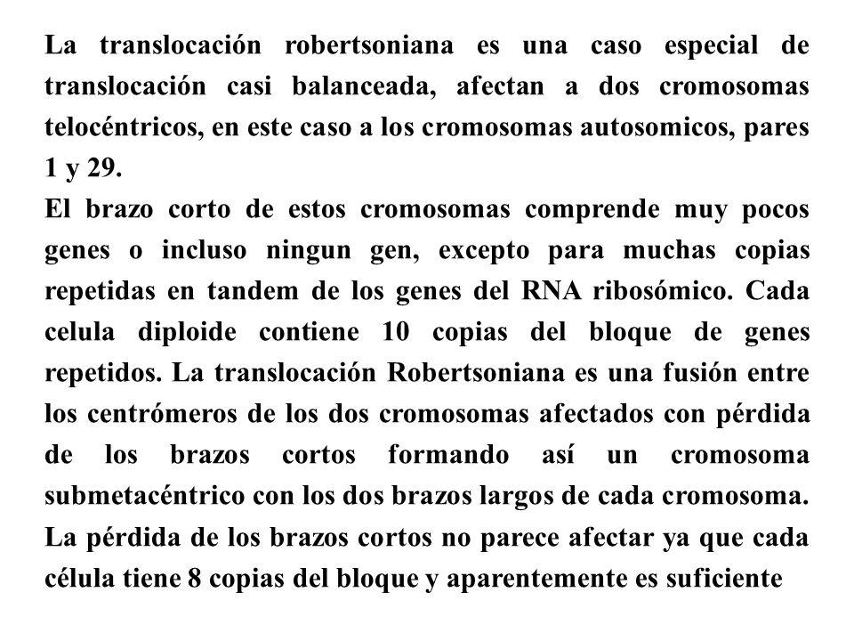 La translocación robertsoniana es una caso especial de translocación casi balanceada, afectan a dos cromosomas telocéntricos, en este caso a los cromosomas autosomicos, pares 1 y 29.