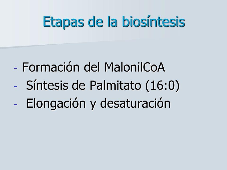 Etapas de la biosíntesis