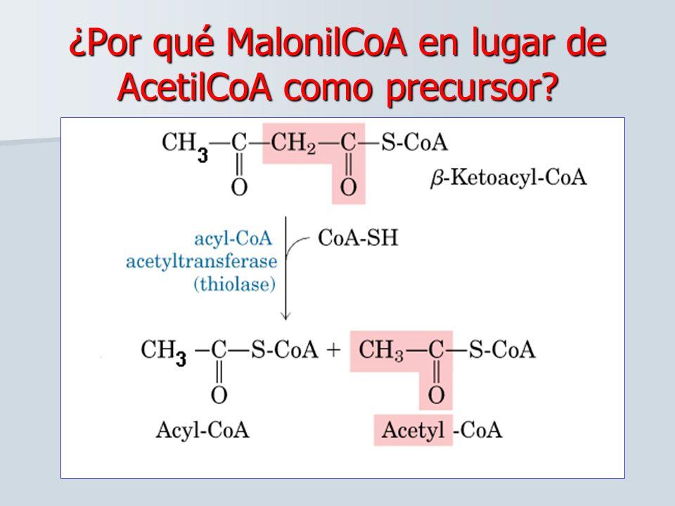 ¿Por qué MalonilCoA en lugar de AcetilCoA como precursor