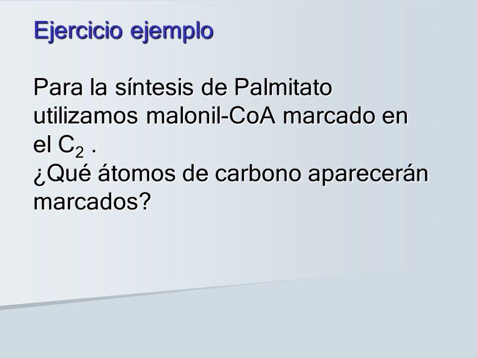 Ejercicio ejemplo Para la síntesis de Palmitato utilizamos malonil-CoA marcado en el C2 .