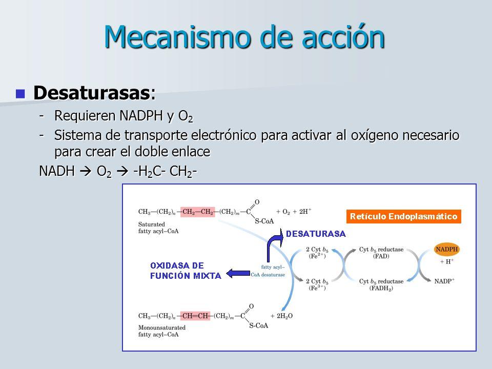 Mecanismo de acción Desaturasas: Requieren NADPH y O2