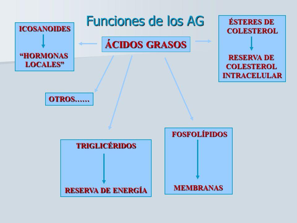 Funciones de los AG ÁCIDOS GRASOS ÉSTERES DE COLESTEROL ICOSANOIDES