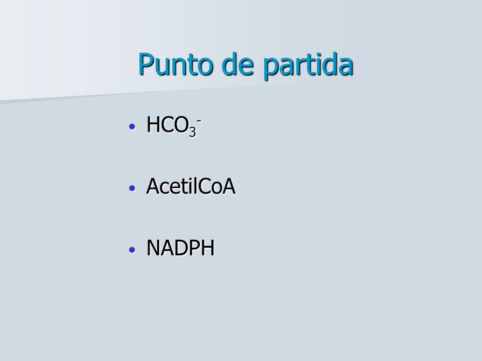 Punto de partida HCO3- AcetilCoA NADPH
