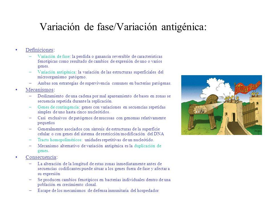 Variación de fase/Variación antigénica:
