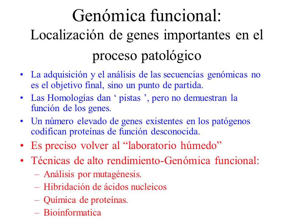 Genómica funcional: Localización de genes importantes en el proceso patológico