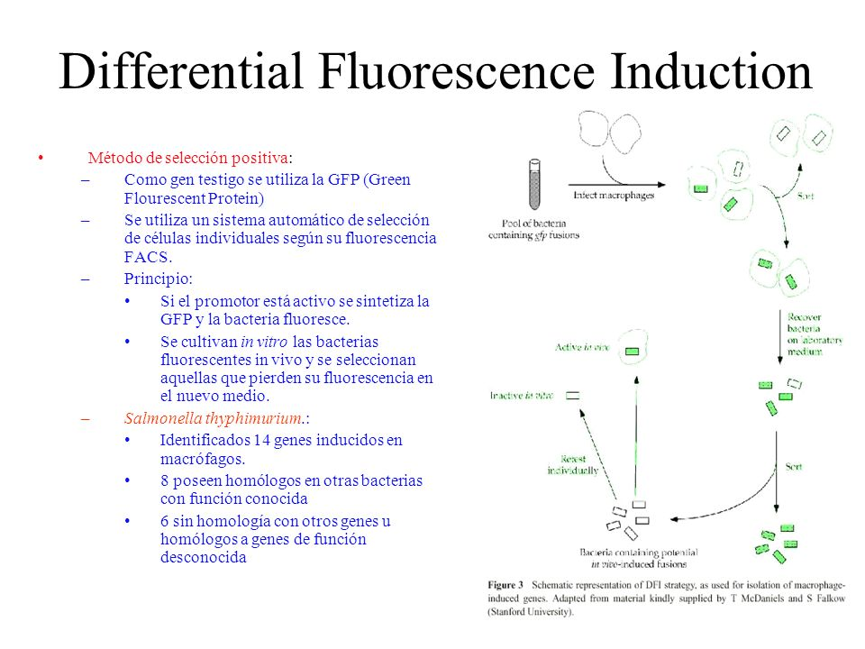 Differential Fluorescence Induction